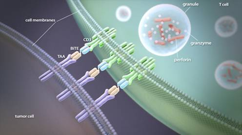 Funcionamiento de los anticuerpos nanotecnológicos