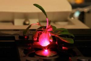 nanotecnologia-fotosintesis